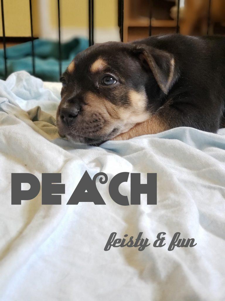 Peach-ADOPTED