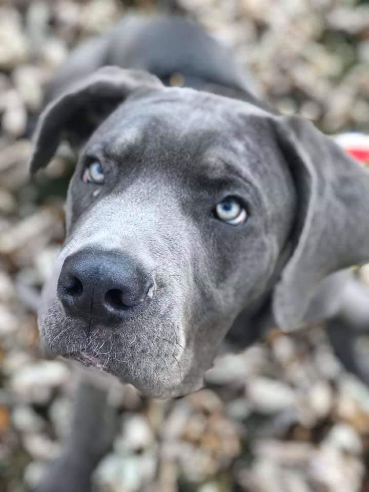 Joplin – 6 month old Male