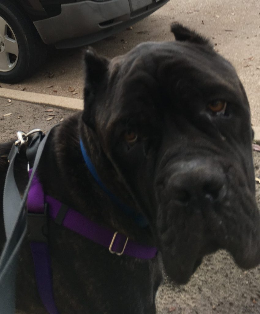 Toby-4 Year Old Male